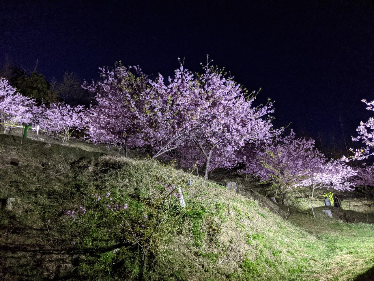 f:id:moriken-isumi:20200223203510j:image