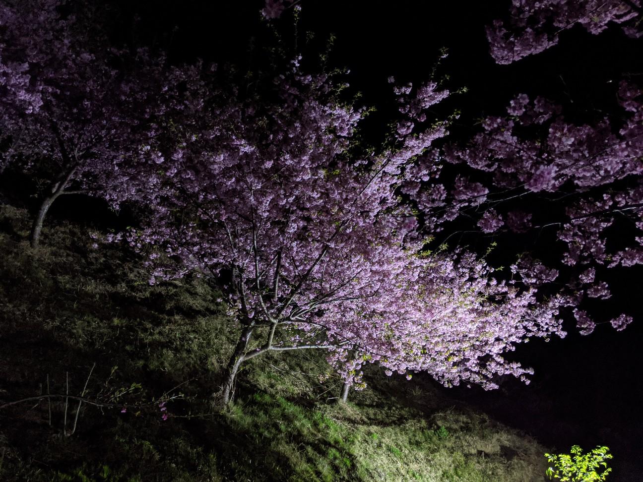 f:id:moriken-isumi:20200223203552j:image