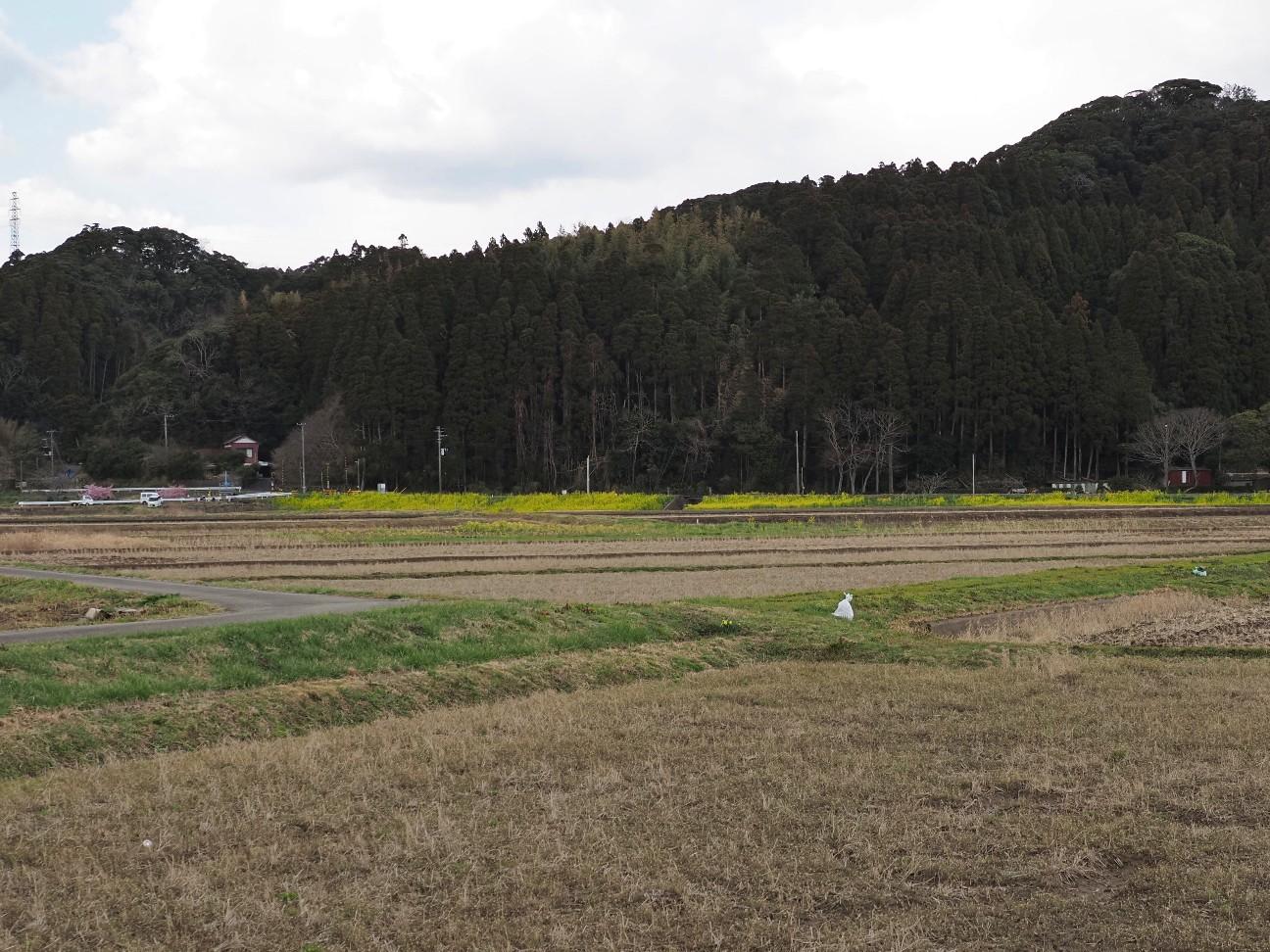 f:id:moriken-isumi:20200227133953j:image