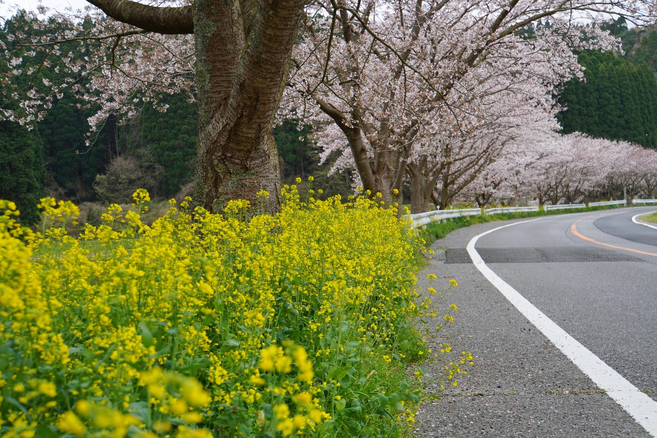 f:id:moriken-isumi:20200330171948j:image