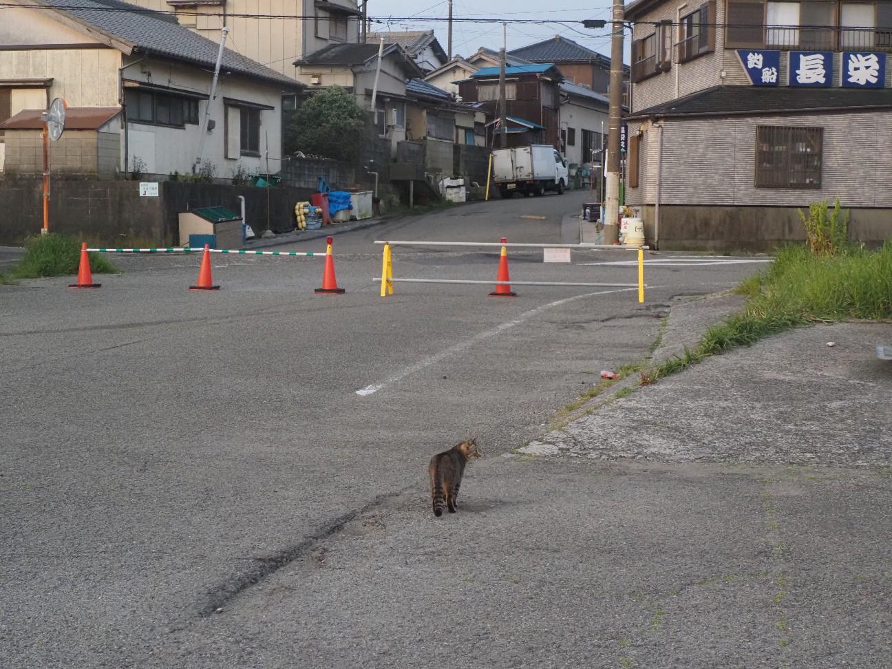 f:id:moriken-isumi:20200503063852j:image