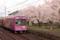 京都新聞写真コンテスト 桜沿線1
