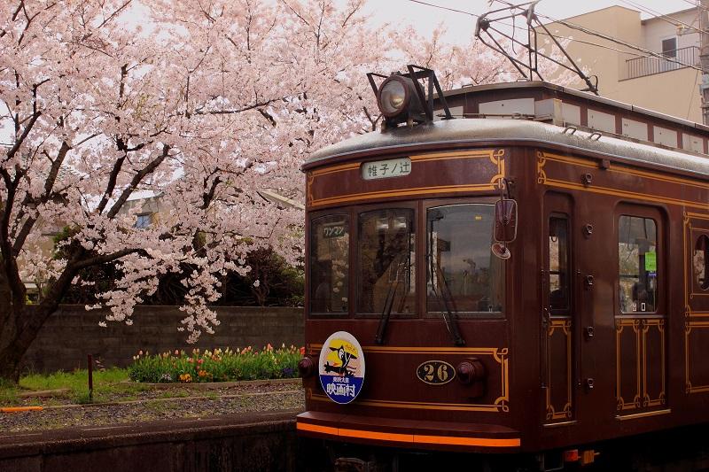 京都新聞写真コンテスト 桜沿線2