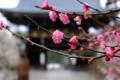 京都新聞写真コンテスト 天満宮の春