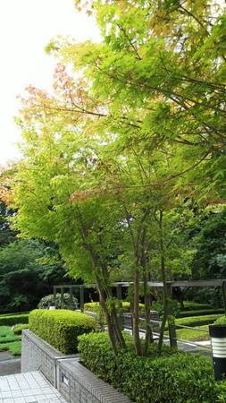 泉屋博古館前の庭園