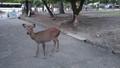 奈良の鹿(奈良国立博物館前)