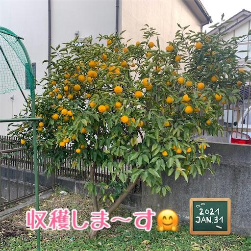 f:id:morinobanana:20210207174011j:image