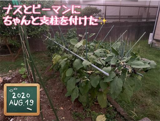 f:id:morinobanana:20210224010505j:image