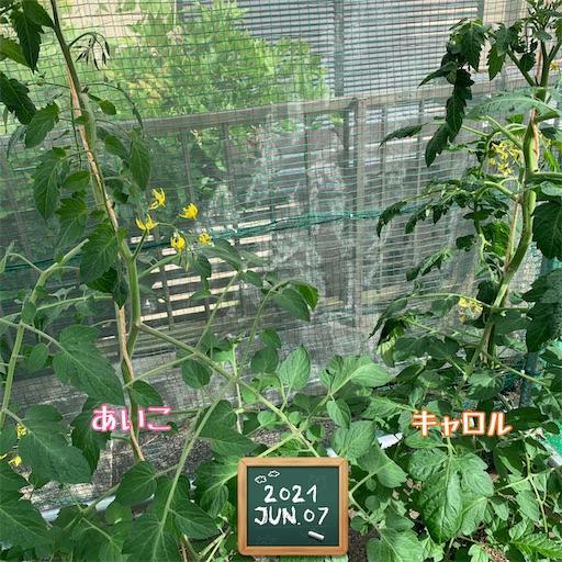 f:id:morinobanana:20210610221109j:image