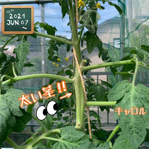 f:id:morinobanana:20210610221112j:image