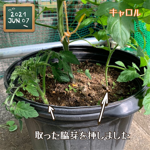 f:id:morinobanana:20210611004309j:image