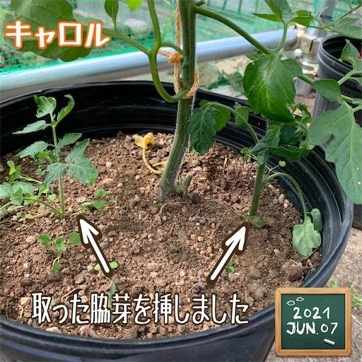 f:id:morinobanana:20210611004316j:image