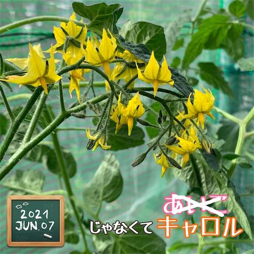 f:id:morinobanana:20210611004759j:image