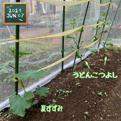 f:id:morinobanana:20210611005037j:image
