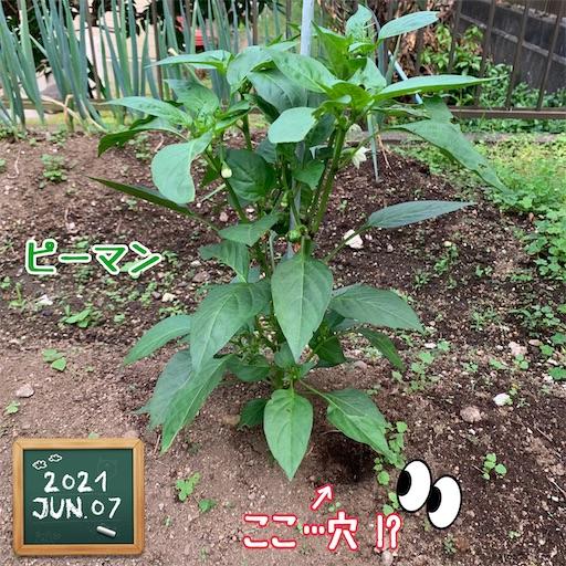 f:id:morinobanana:20210611145447j:image
