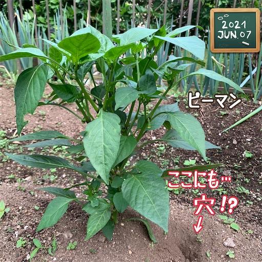 f:id:morinobanana:20210611145454j:image