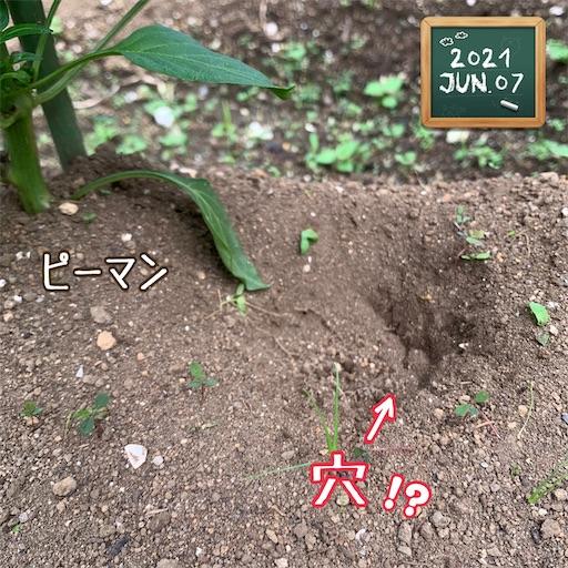 f:id:morinobanana:20210611145457j:image