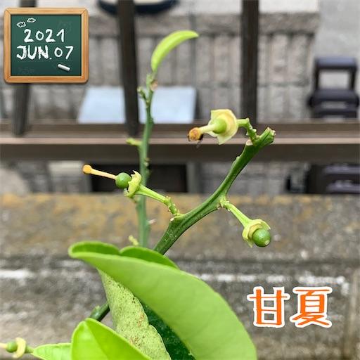 f:id:morinobanana:20210611150727j:image