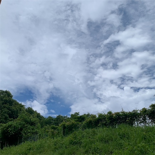 f:id:morinobanana:20210625224754j:image