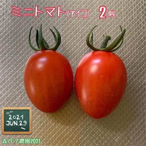 f:id:morinobanana:20210703174312j:image