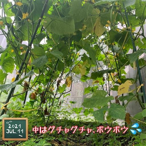 f:id:morinobanana:20210716162021j:image