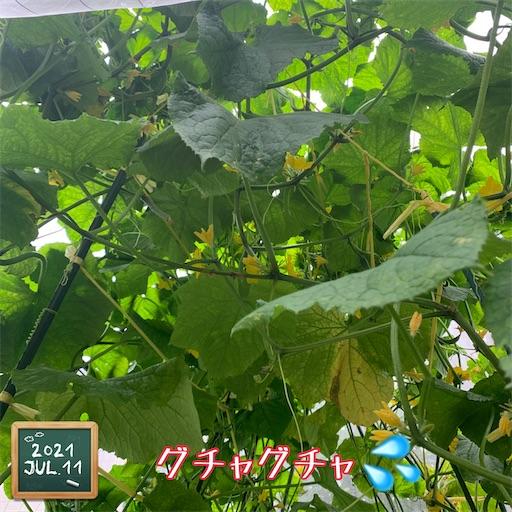 f:id:morinobanana:20210716162026j:image