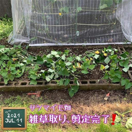 f:id:morinobanana:20210716162612j:image