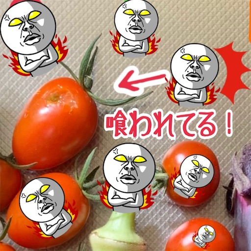 f:id:morinobanana:20210721173207j:image