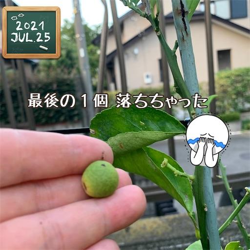 f:id:morinobanana:20210726151748j:image