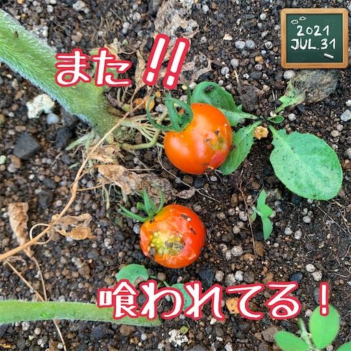 f:id:morinobanana:20210802165359j:image