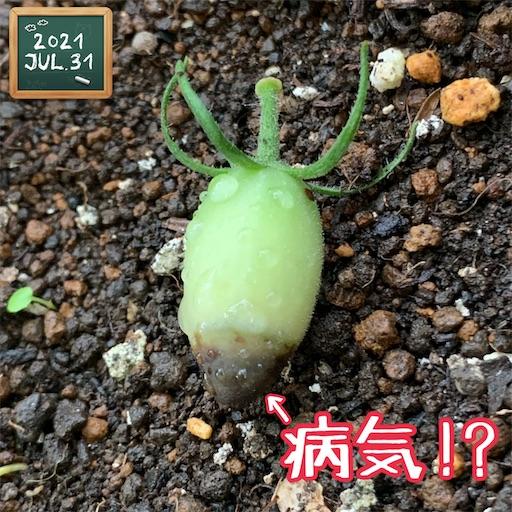 f:id:morinobanana:20210802171230j:image