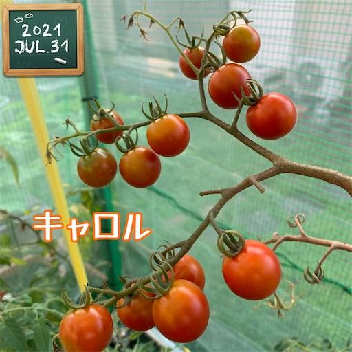 f:id:morinobanana:20210802171240j:image