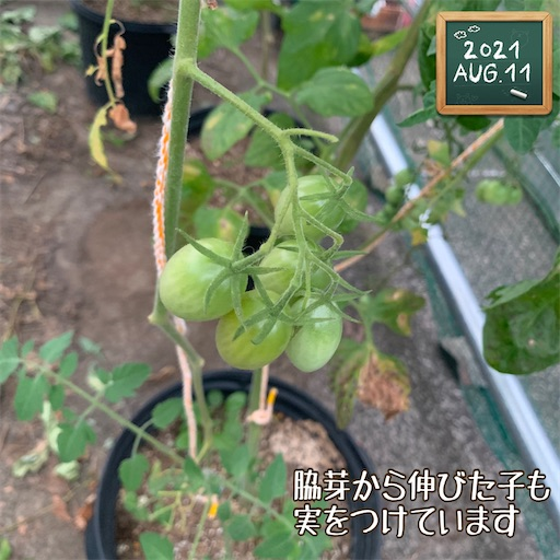 f:id:morinobanana:20210812192449j:image