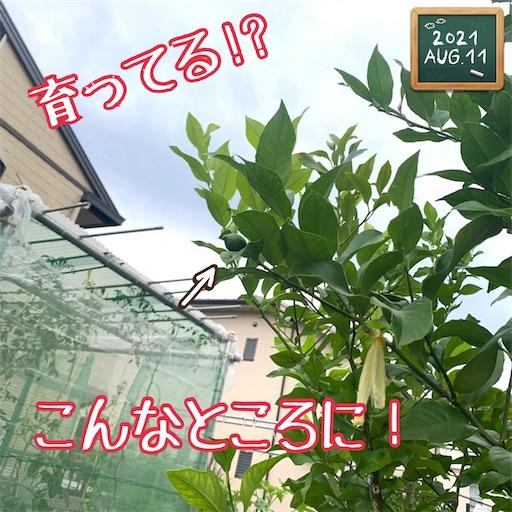 f:id:morinobanana:20210812193506j:image