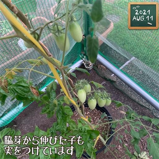 f:id:morinobanana:20210812194846j:image