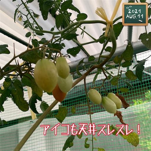f:id:morinobanana:20210812195121j:image