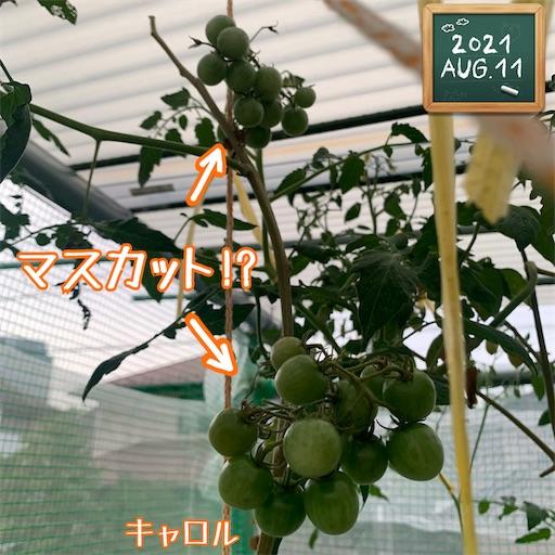 f:id:morinobanana:20210812195124j:image