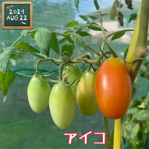 f:id:morinobanana:20210822161603j:image