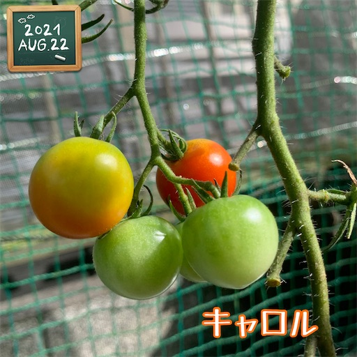 f:id:morinobanana:20210822161620j:image