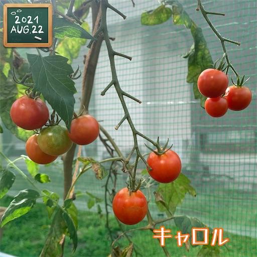 f:id:morinobanana:20210822161623j:image