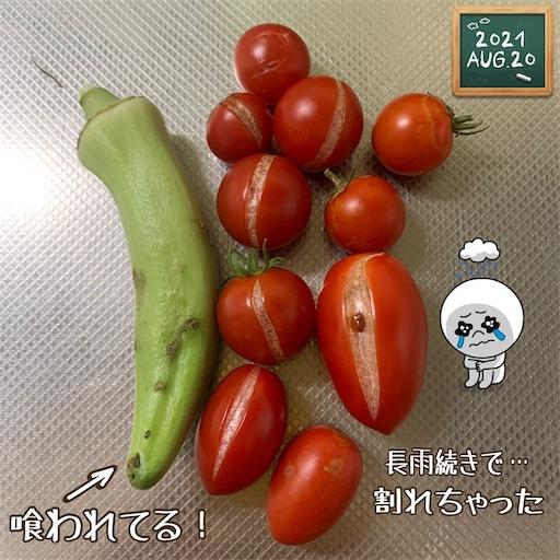 f:id:morinobanana:20210822172441j:image