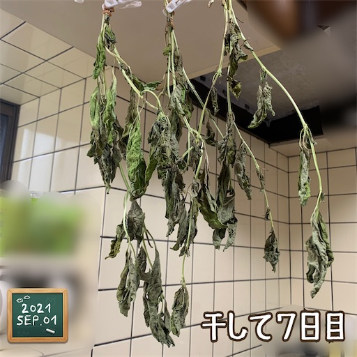 f:id:morinobanana:20210901154744j:image