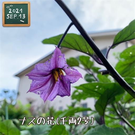f:id:morinobanana:20210916151714j:image