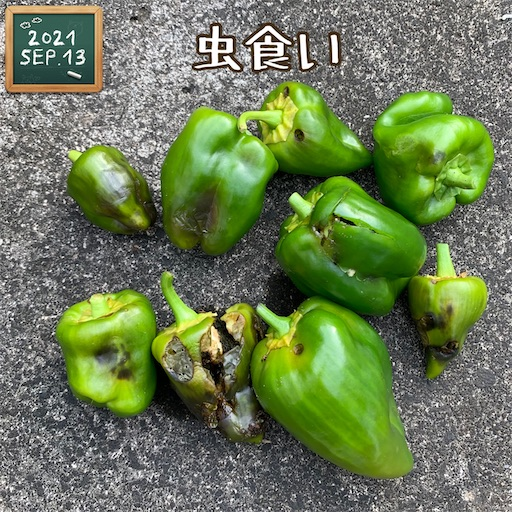 f:id:morinobanana:20210916154014j:image