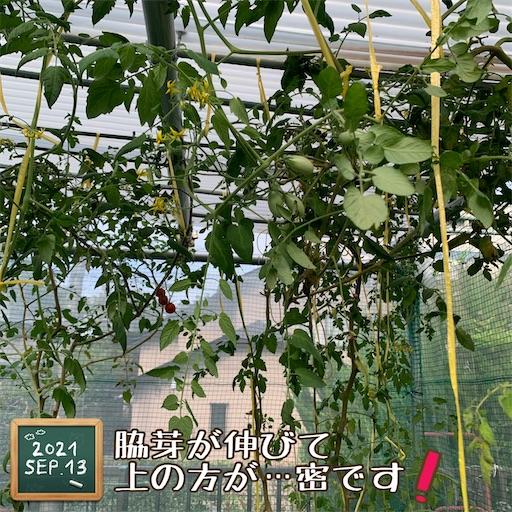 f:id:morinobanana:20210916155016j:image