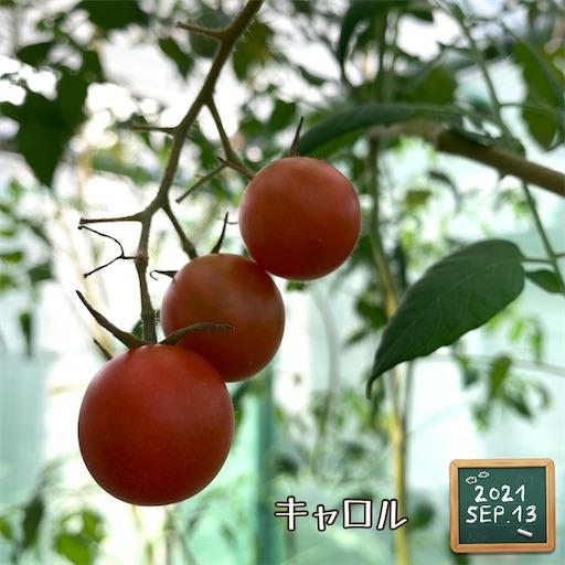 f:id:morinobanana:20210916155638j:image