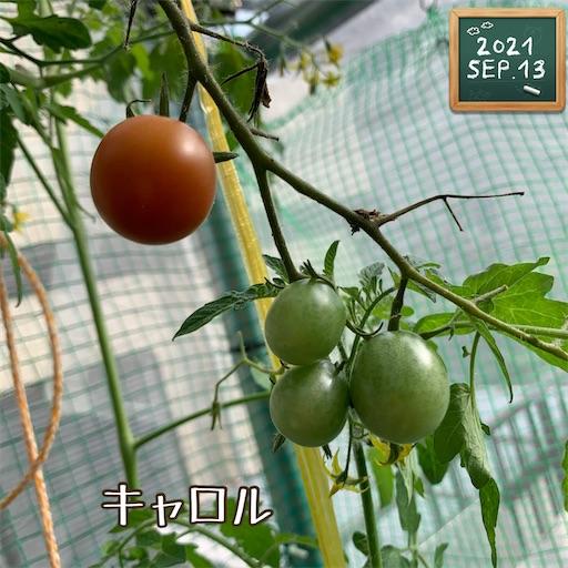 f:id:morinobanana:20210916155657j:image