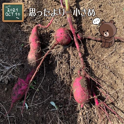 f:id:morinobanana:20211013152119j:image