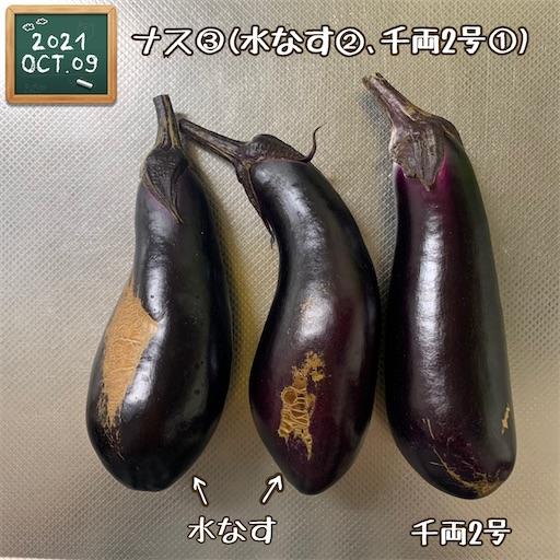 f:id:morinobanana:20211013155105j:image