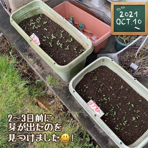 f:id:morinobanana:20211013155857j:image